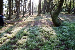 stonebyres-wood-rigg