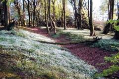 stonebyres-wood-track2